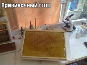 Прививочный стол
